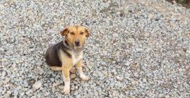 Szukamy nowego właściciela dla psa